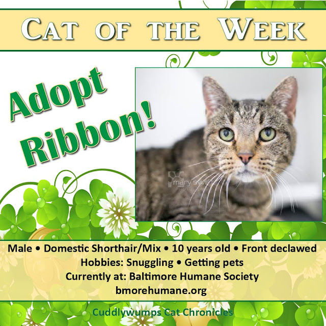 Cat of the Week: Ribbon