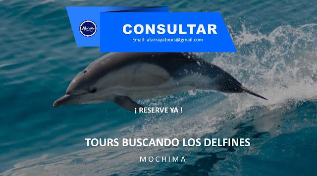 imagen Tours buscando los delfines Mochima