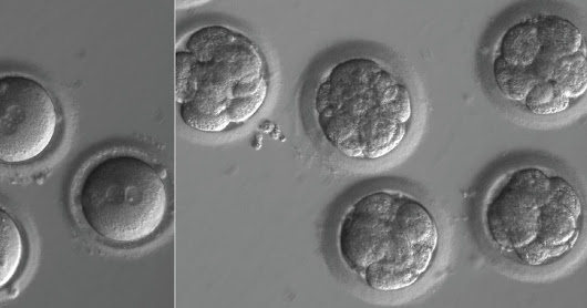 Are DNA modified human embryos a mass-destruction weapon?