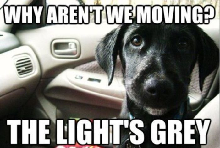30 Funny animal captions - part 51, best funny caption pictures, animal meme, funny meme, animal pictures with sayings
