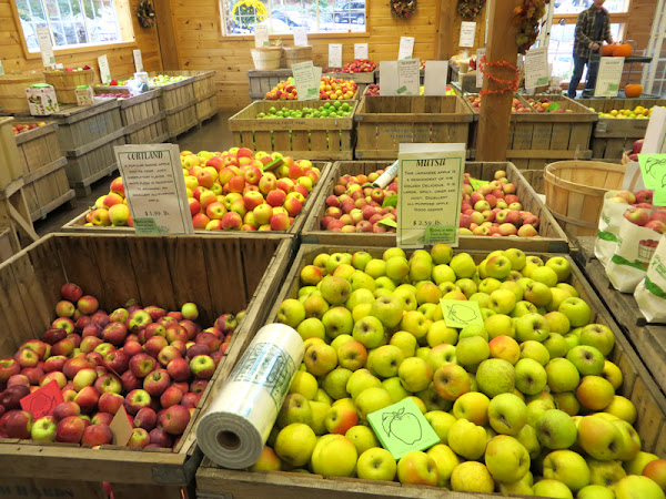 Bins and bins of apples