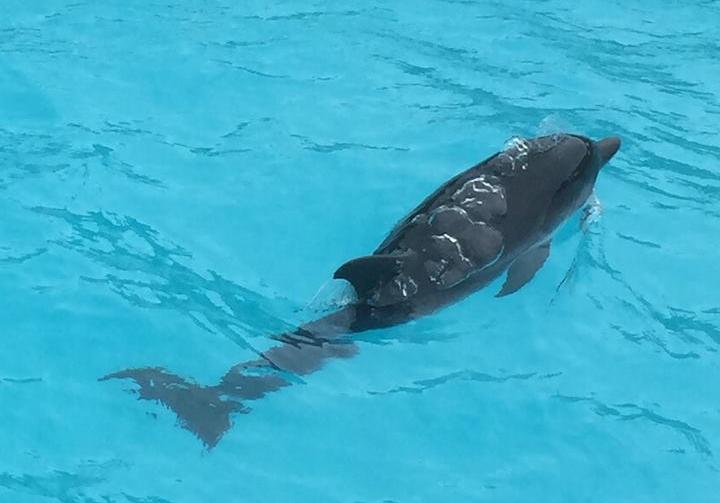 Golfinho na piscina