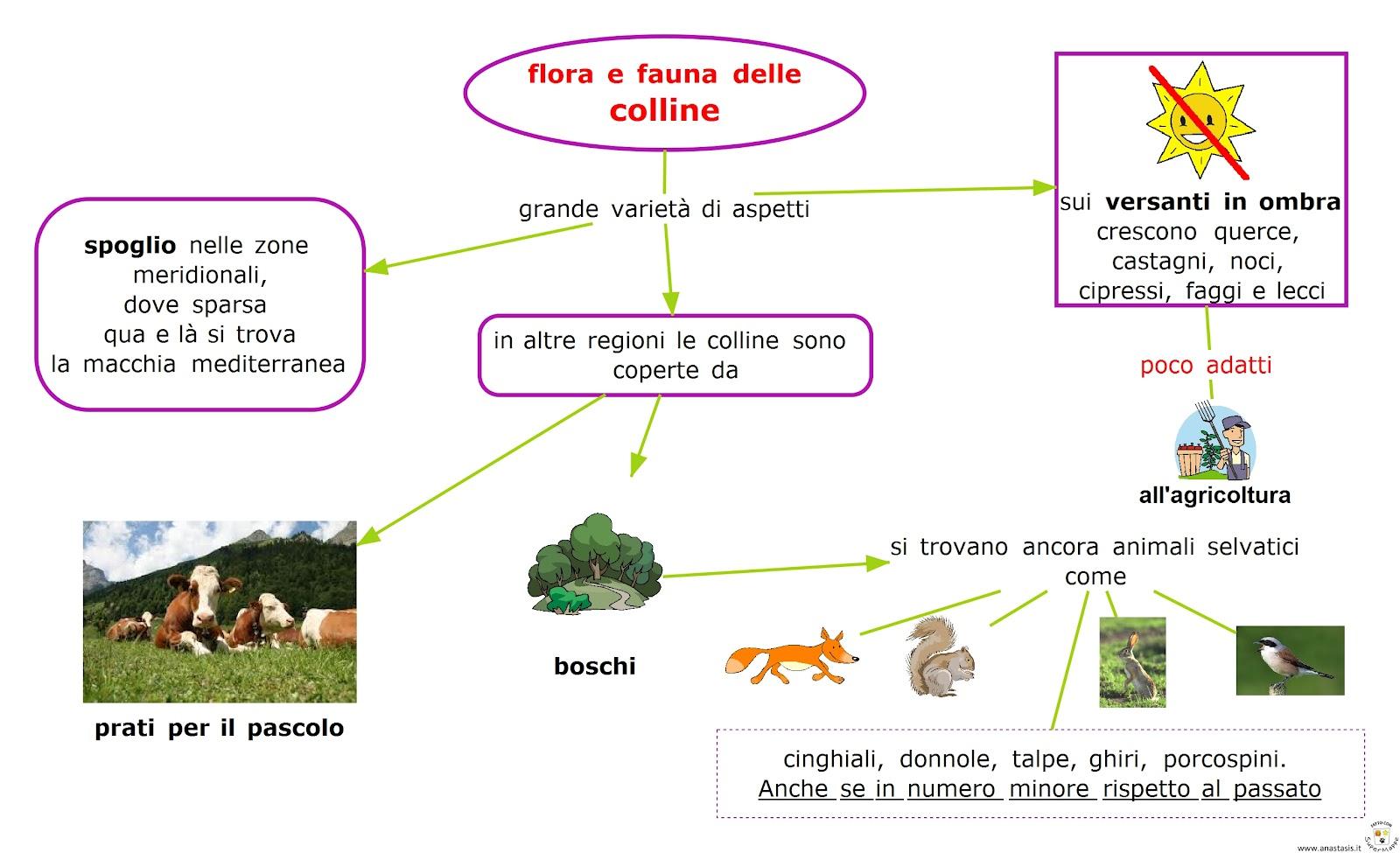Paradiso delle mappe Colline  flora e fauna