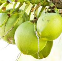 10-manfaat-dan-khasiat-air-kelapa-muda-untuk-kesehatan-tubuh