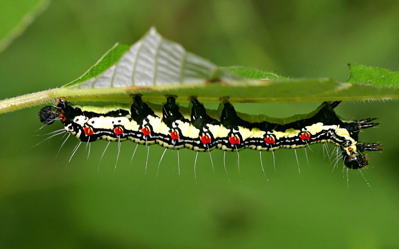 QQ Wallpapers: Amazing Insects Wallpapers Set 2