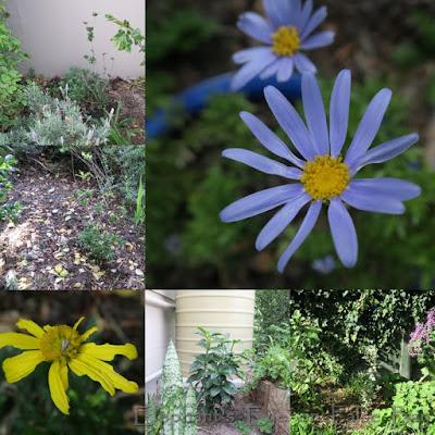Plants from Toos van den Berg