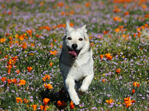 Keep Your Pet Dog Safe from These 12 Toxic Flowering Plants