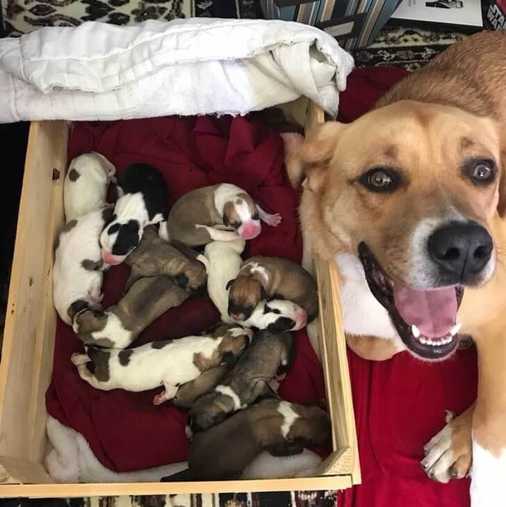 21 Cute Pictures Of Animals That Can Make Even The Worst Day A Bit Better - Just look at this happy mama!