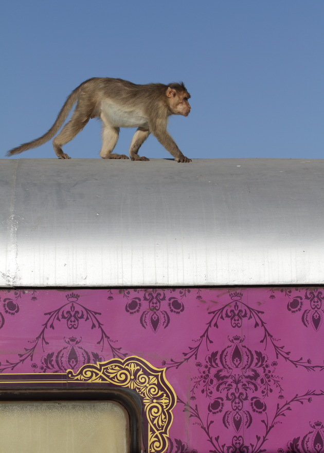 Monkey on train - Badami Railway Station, Karnataka