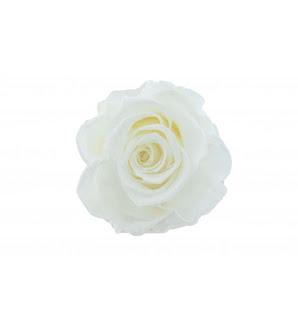 https://www.florariadevis.ro/blog/trandafiri-criogenati/