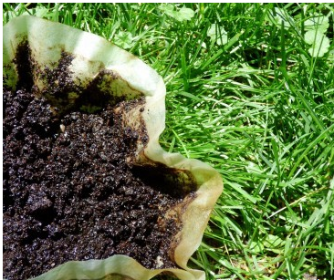 Are Coffee Grounds Good For Grass