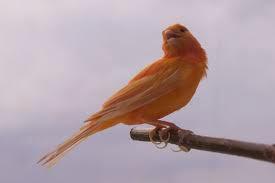 http://www.kabarloka.com/2014/11/5-tips-cara-merawat-burung-kenari-saat.html