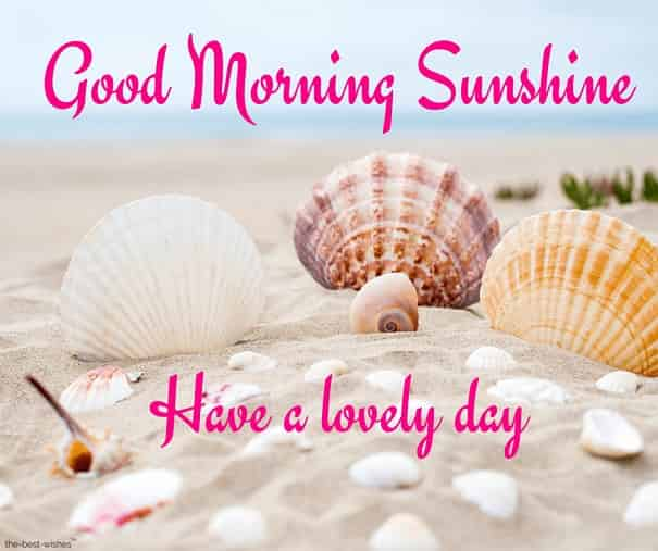 good morning sunshine wishes have a lovely day
