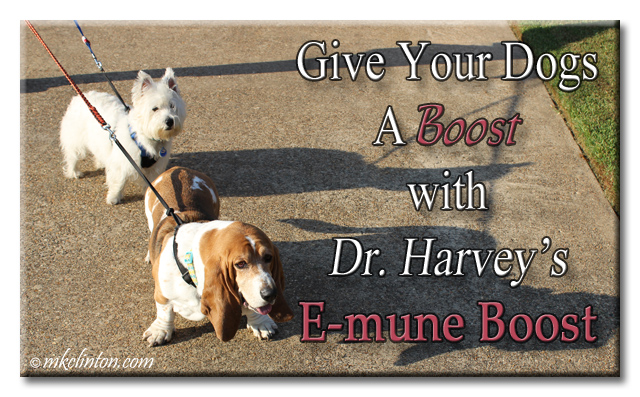 "Bentley Basset & Pierre Westie ""Give your dog a boost with Dr.. Harvey's E-mune Boost"" meme"
