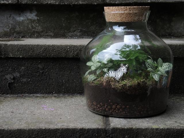 mijn terrarium  ...