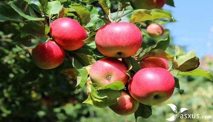 15 Makanan Lovebird Agar Gacor Dan Ngekek Panjang
