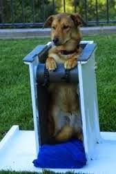 cadeira para megaesofago