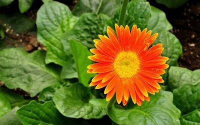 summer flower widescreen hd wallpaper