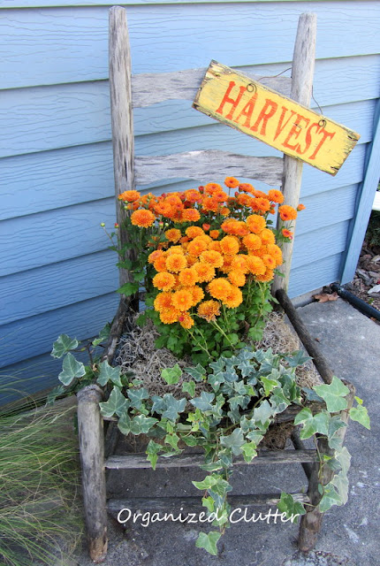 Weathered Gray Chair Planted with Mums & Ivy for Fall