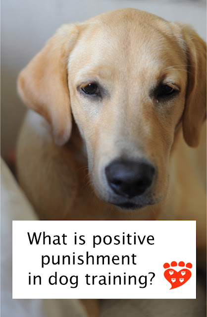 What is punishment in dog training? A user-friendly guide to positive punishment with examples and the risks of its use