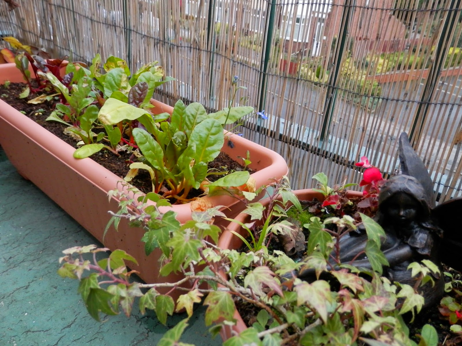 Winter balcony garden.  secondhandsusie.blogspot.co.uk