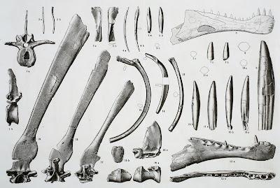 Holotip de Spinosaurus