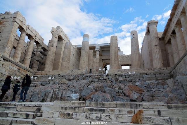 Propyleje Akropol Ateny Grecja, wysokie kolumny, marmurowe schody na których siedzi rudy kot, obok turyści
