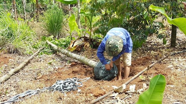 Chặt hết cành và lá, di chuyển đến nơi có bóng mát, tưới nước khoảng 1 tháng, khi nào ra lá mới thì mới trồng được