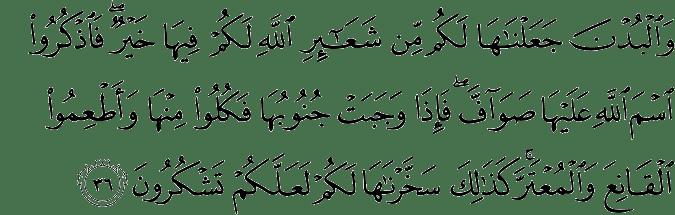 Surat Al Hajj ayat 36