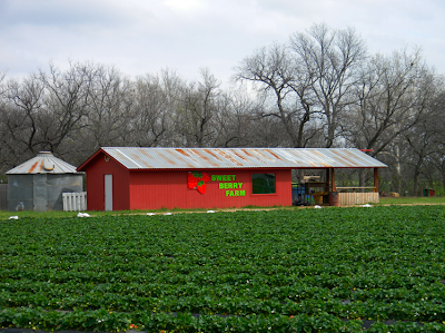Sweet Berry Farm in Marble Falls