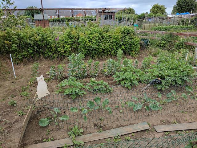 allotment-june-2017