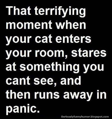That terrifying moment when your cat walks in, stares at something invisible, and then runs away