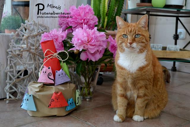 Katze Mimi feiert mit einer Katzentorte ihren 11. Geburtstag
