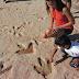 Hallan en la India huellas de dinosaurios de 150 millones de años