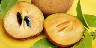 sapodilla(chikoo) health benefits in urdu