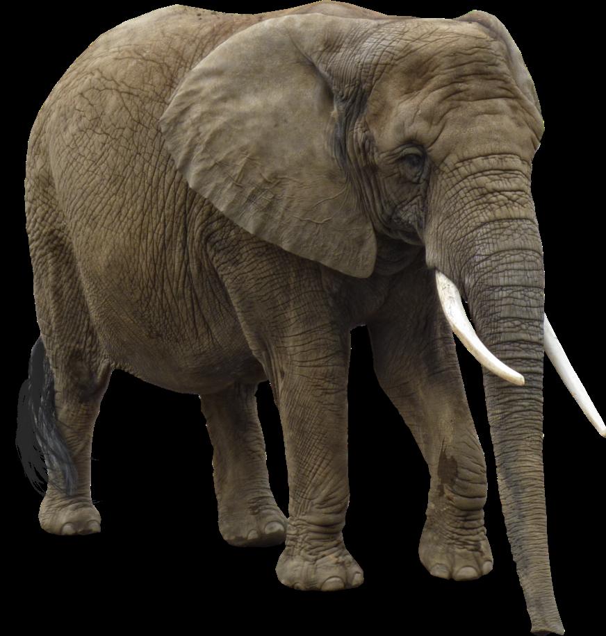 Editando Photoshop: Elefantes-PNG
