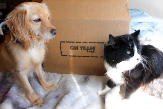 Pet Treater, dog subscription, dog treats, dog toys, subscription box