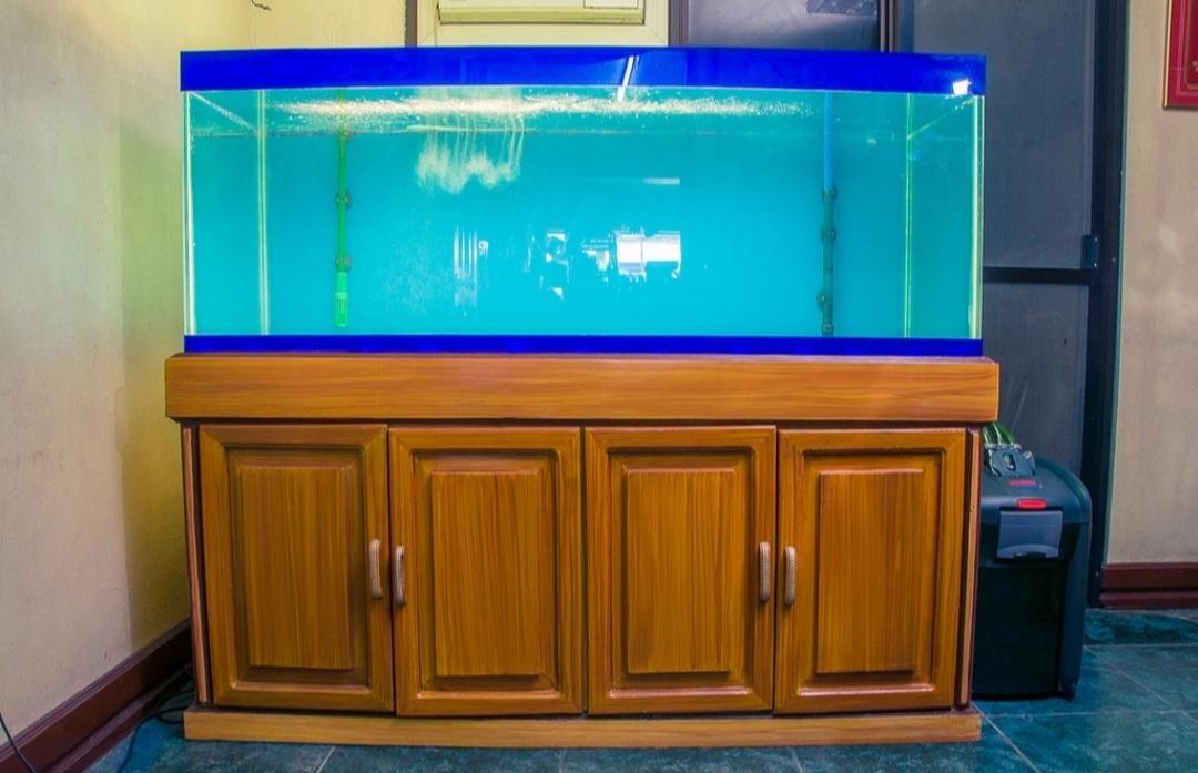 Ukuran Aquarium Arwana