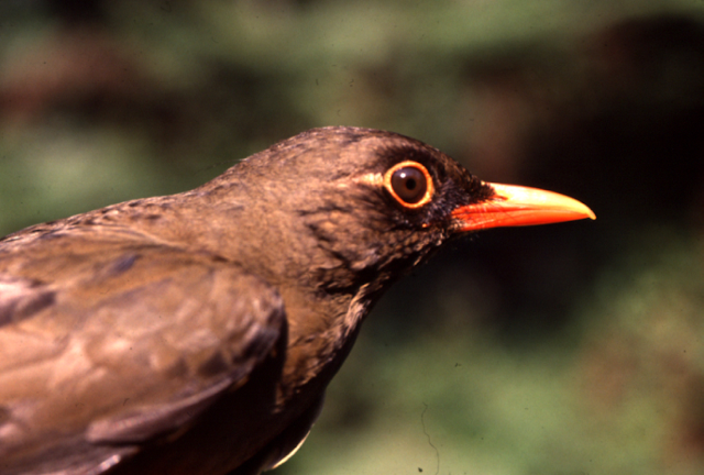 Targeted forest regeneration: A blueprint for conserving tropical biological diversity?