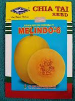 melon kuning, menanam melon, jual benih melon hibrida, lmga agro