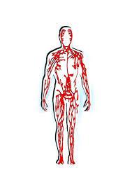 Kelainan atau Gangguan pada Sistem Peredaran Darah, Sistem Pencernaan, dan Sistem Pernapasan Manusia