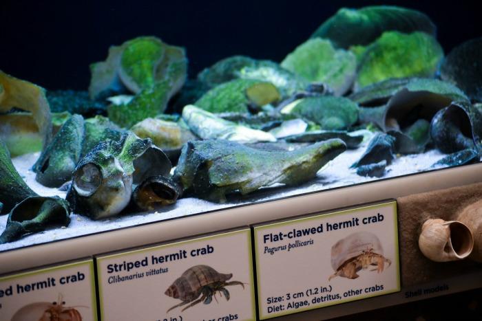 Best Aquarium