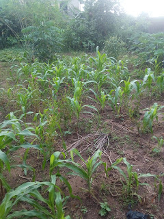 planting and post planting operations in agriculture