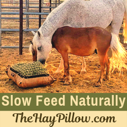 Introducing Hay Pillow