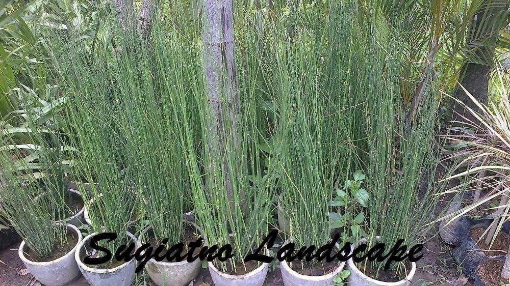 Bambu-air