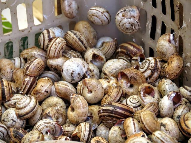 Streat Palermo Tour Sicily - snails