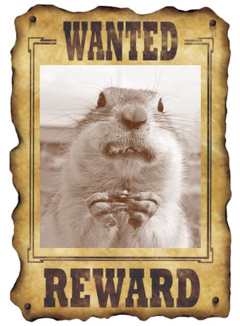 Ground Squirrel Hunting Day - Modoc County, Belding Ground Squirrels