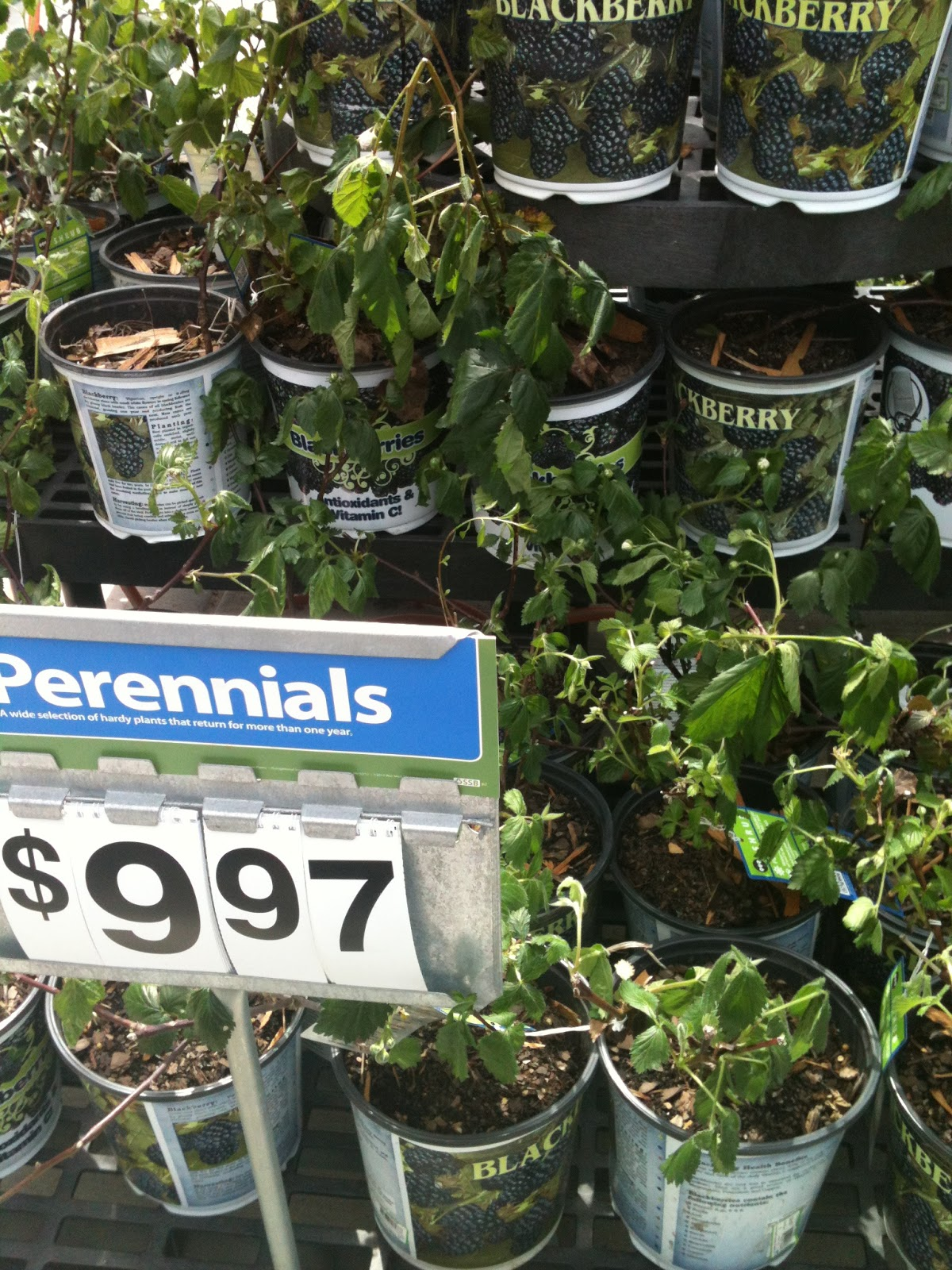 Walmart's Garden Center and Outdoor Living Displays are ... on Walmart Outdoor Living id=64222