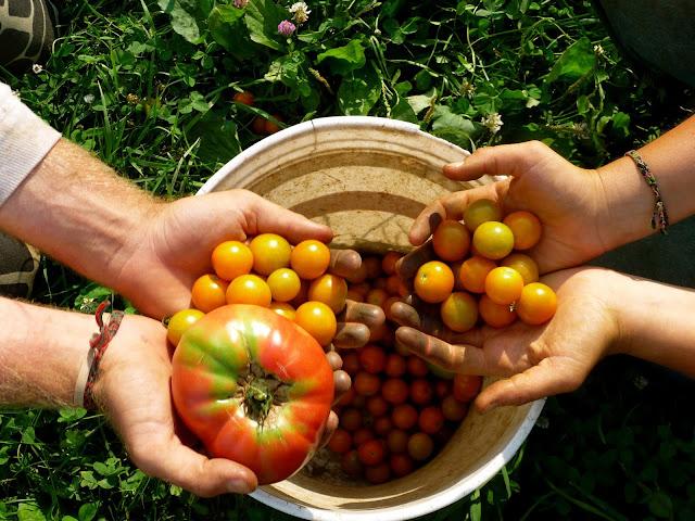 Nông nghiệp hữu cơ Việt Nam
