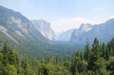las, drzewa, elfy, sosny, drzewa iglaste, niebo, góry, skały, Ameryka, USA; źródło: travelcoffebook.com